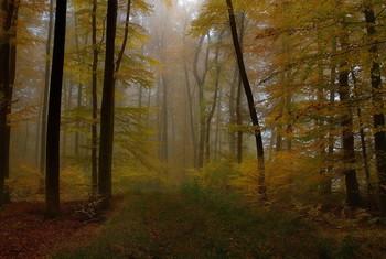 Прошедшая осень. / Лесной пейзаж . Осенним утром .