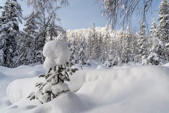 / зима,лес,снег,ёлка