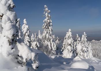 / зима,снег,ели