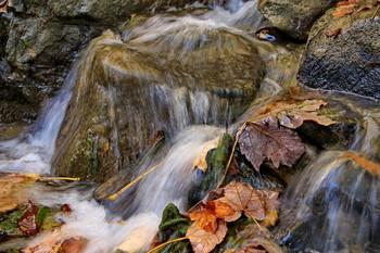 Осенний этюд / Горное речка,осенние листья