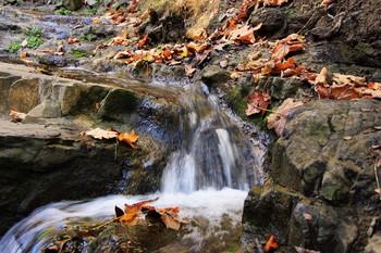 Осеннее / Живая вода, желтые листья.