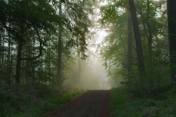 Был месяц май.. / Туманное утро в майском лесу . Зарисовка .