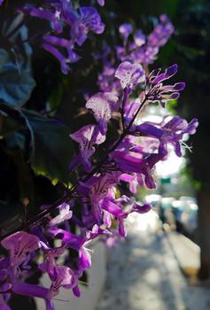 И всё цветёт, благоухая... / Городское утро в цветущих ветках кустов.