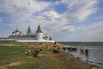 Монастырское стадо. / Макарьевский монастырь.