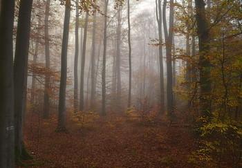 Где прячутся туманы .. / Осеннее туманное утро в лесу . Зарисовка .