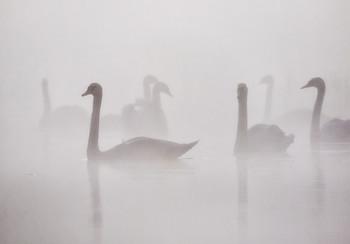 Туманным утром / ***