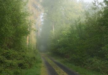 Весеннее утро. / Туманное утро в весеннем лесу.