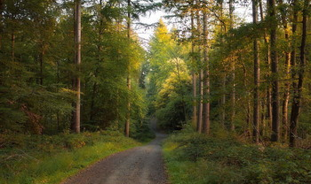 Утро наступило .. / У тро в осеннем лесу .