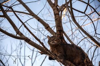 В ветвях / Кошка на дереве