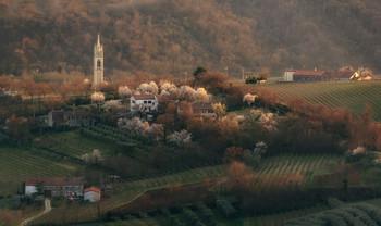 В деревне весна... / Цветущий миндаль,конец февраля 2021-года.