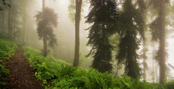 Туманной тропой / Реликтовый лес, Горки город, Красная поляна. http://www.youtube.com/watch?v=hlWiI4xVXKY