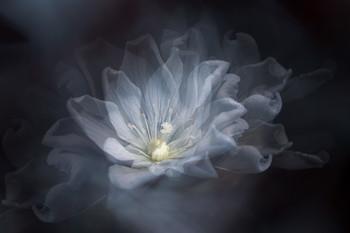 Flower fantasy... / 2021