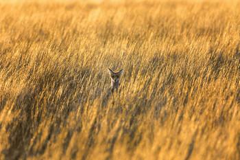 Кто там прячется в траве? / ***