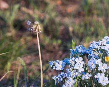 Смена пришла / Одни цветы отцветают, другие начинают