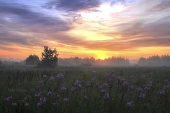 Утро в лёгком тумане. / Тверская область.