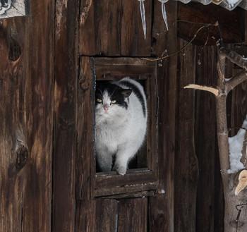 Не кудрявая жизнь / Зимой в сарае трудно жить [img]https://i.imgur.com/ErpYgRW.jpg[/img]
