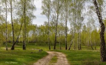 В царстве вечернем зеленой Весны. / Майский вечер.