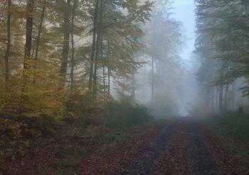 Про осень... / Пейзаж осеннего леса.