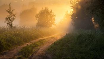 Летнее утро / утро, туман, свет, Фрязино, Гребнево