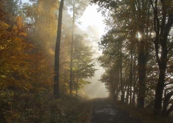 В ноябре туманы... / Туман и солнце ..Лесной осенний пейзаж .