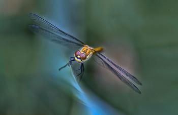 Что за чудо стрекоза, только крылья и глаза...) / ...