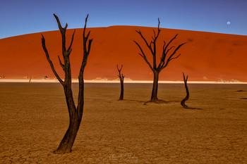 Дедвлей / Пустыня Намиб