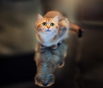 Моя котэ..) / ...