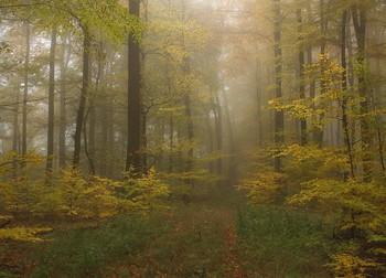 По осенним тропинкам.. / Туманное утро в осеннем лесу .