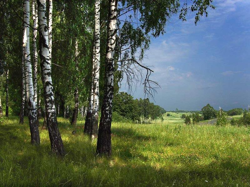 текос картинки лесных опушек времени перелистывать все