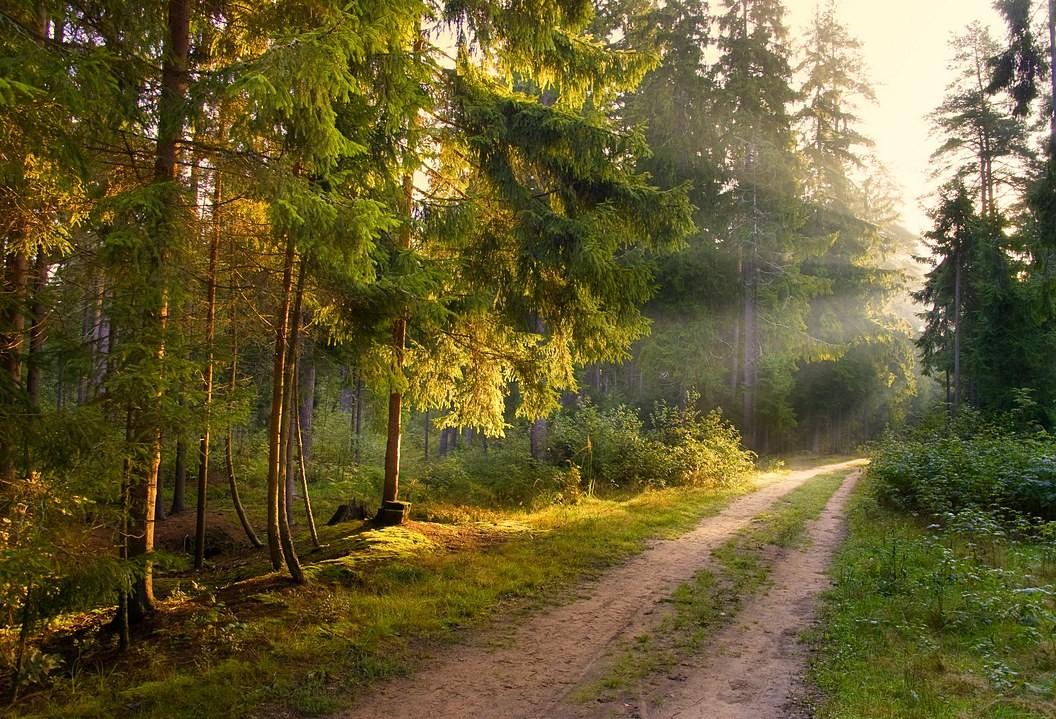 лес летним утром картинки нем живут духи