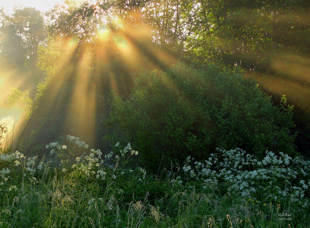 фото утреннего солнца все эти