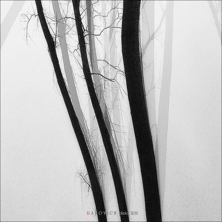 Деревья Корней...
