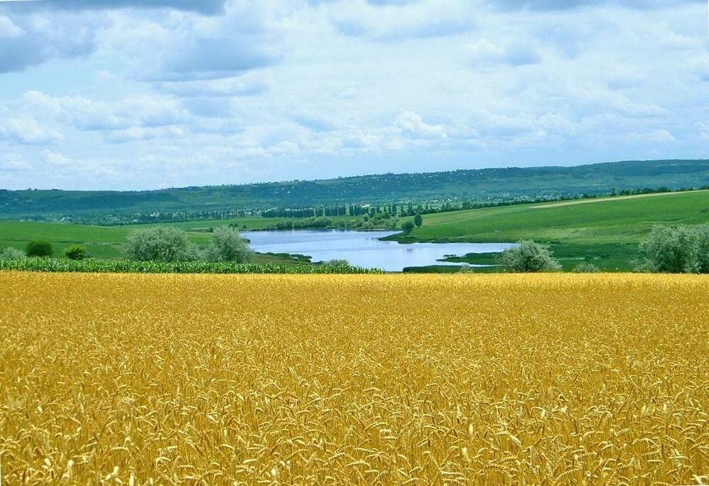 безоговорочным картинка природа украины летом певица всегда