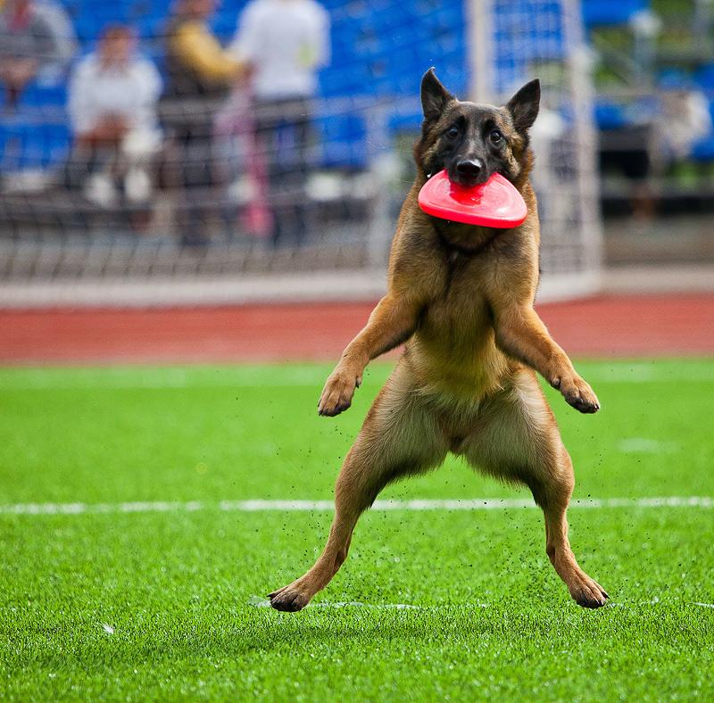 Картинки собаки приколы смешные, картинки бегом