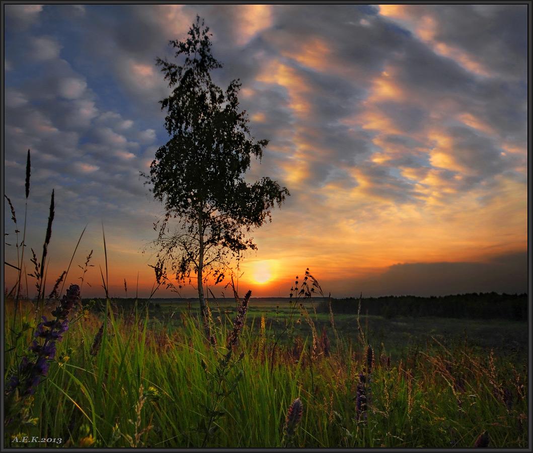 березы на закате картинки гецати аланский провидец