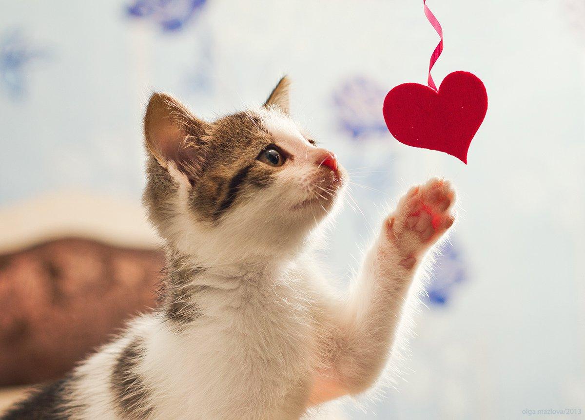 этом фото котят с сердечками как говорится
