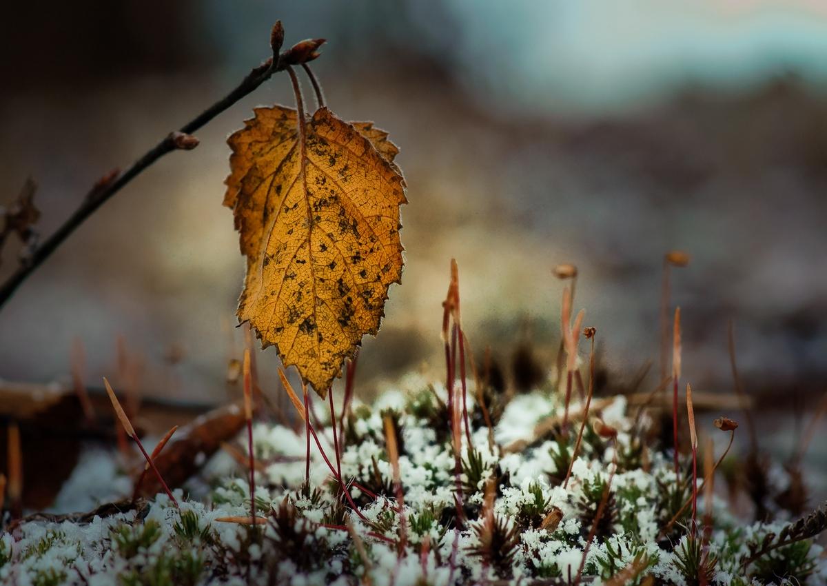 Картинки капризы осени
