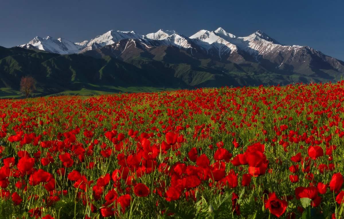 Картинки с киргизии