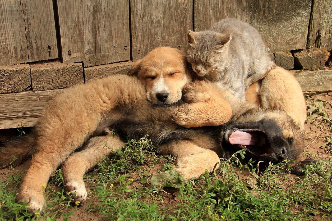 Картинки, прикольные картинки животных друзей