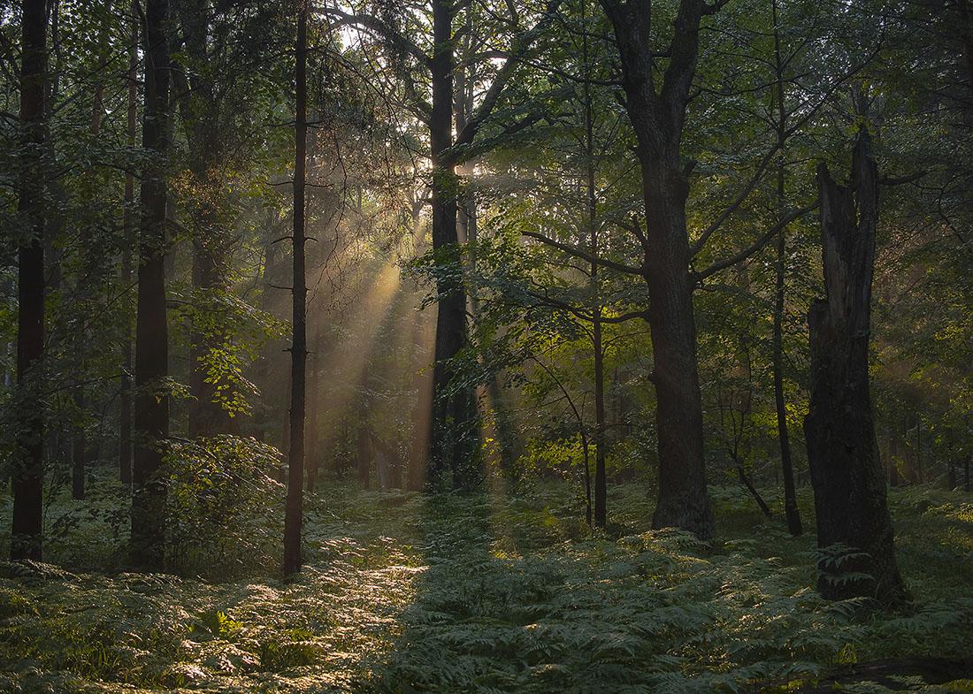 вирусы фото дождливого леса голосовые открытки