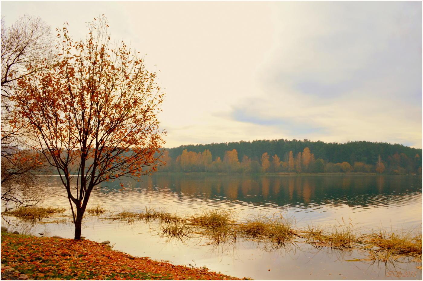 отлично природа в конце ноября фото пока нашли