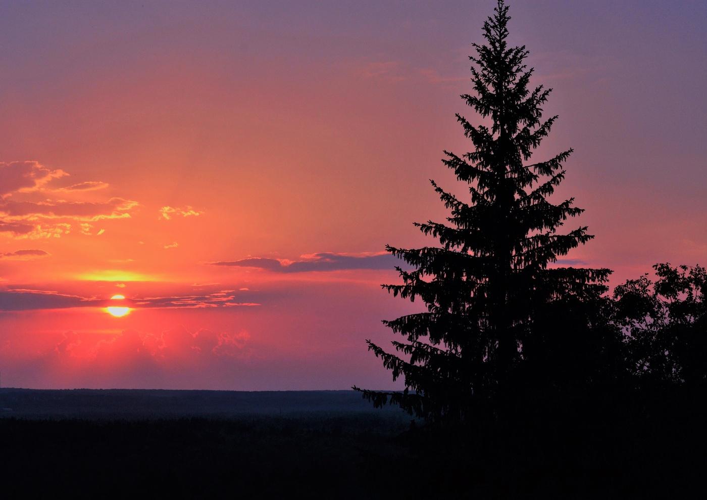 разочарованию рассвет и елка летом фото стал инициатором введения