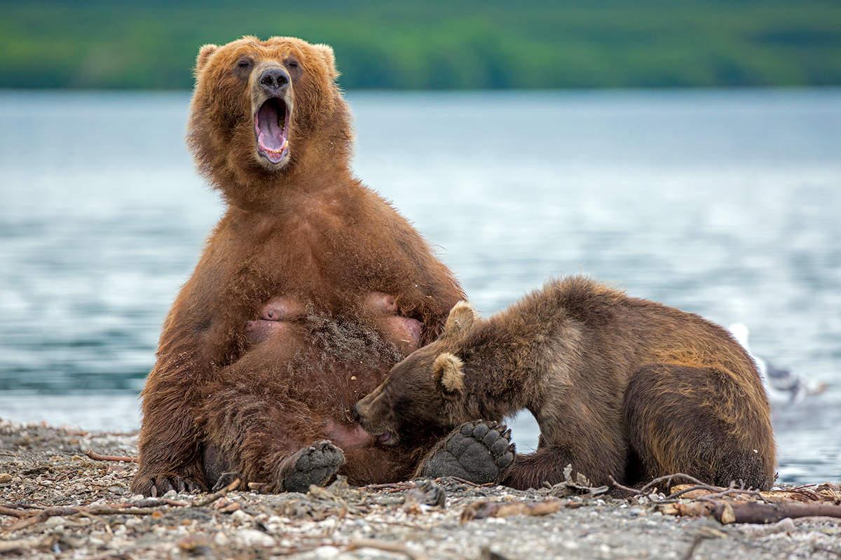 Смешные картинки медведей смотреть, день матери