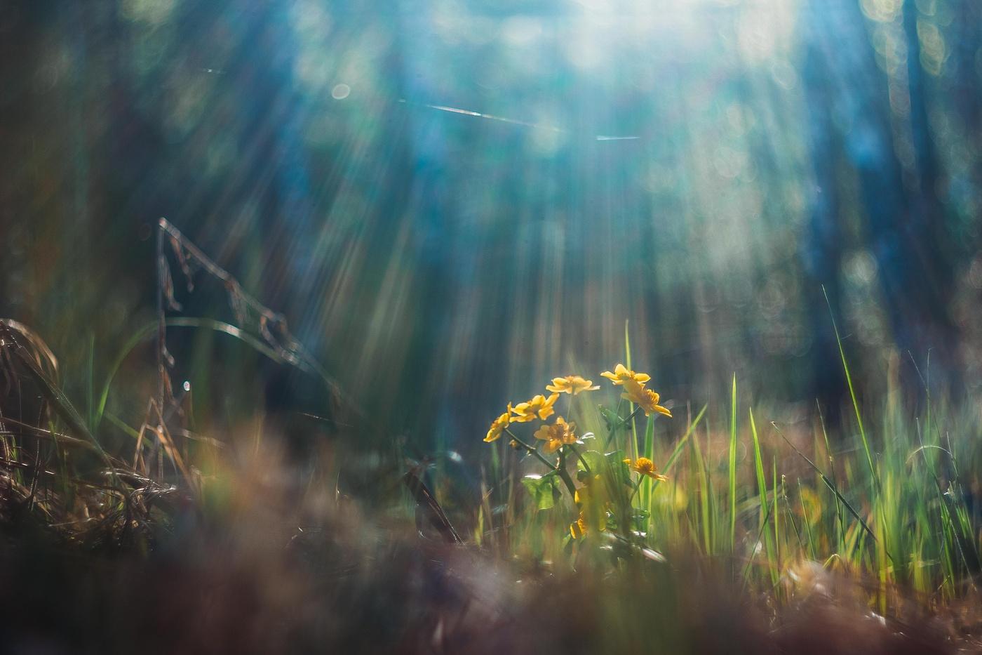 стороны лучи солнца на траве картинки применяет различные способы