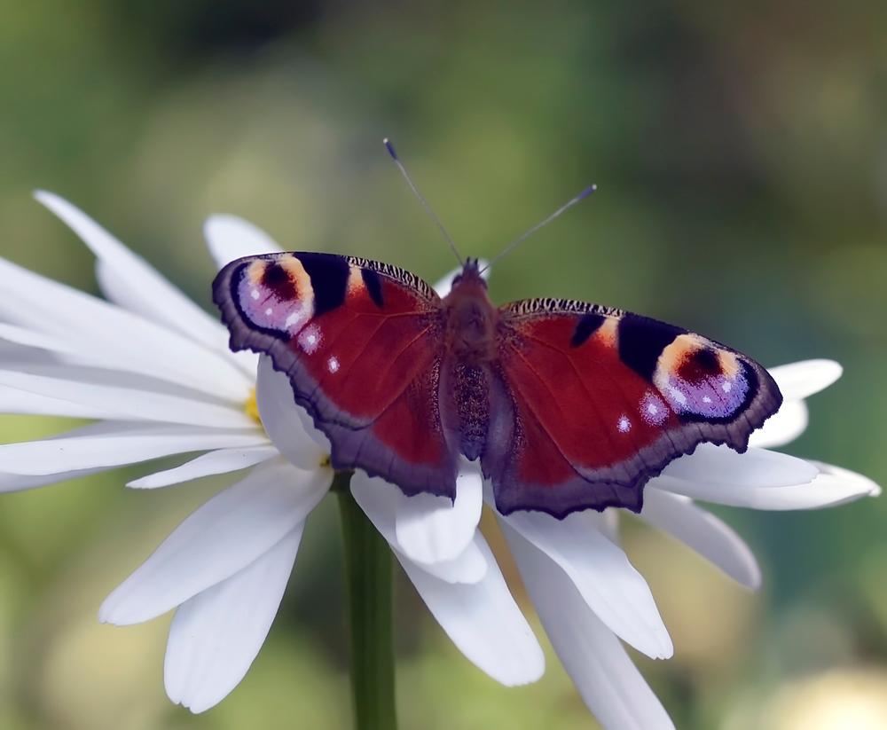Бабочка фото картинка