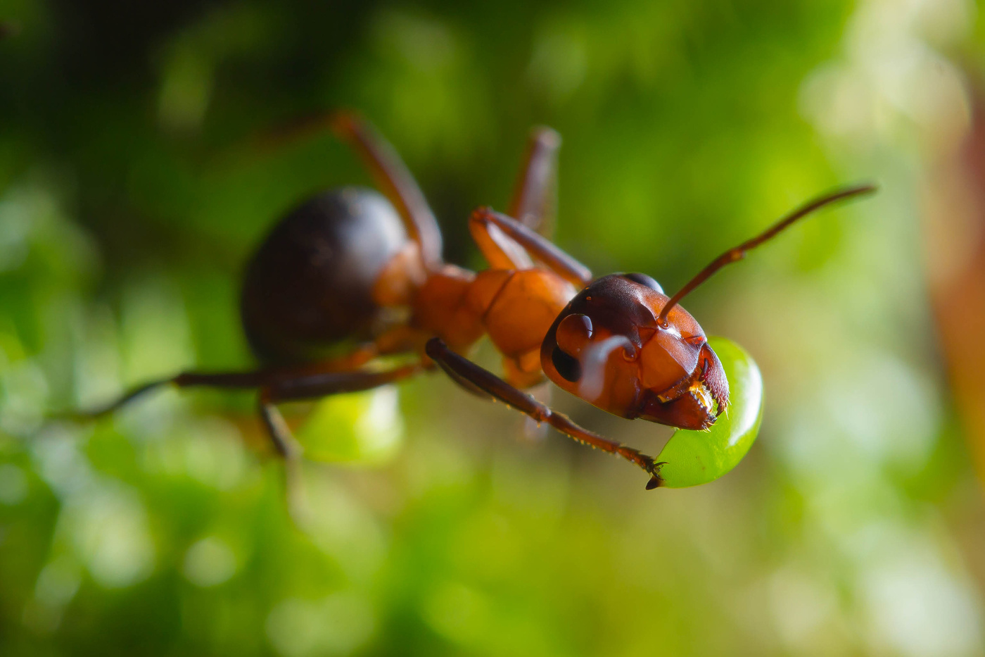 Картинки муравьи, приколы картинки картинки