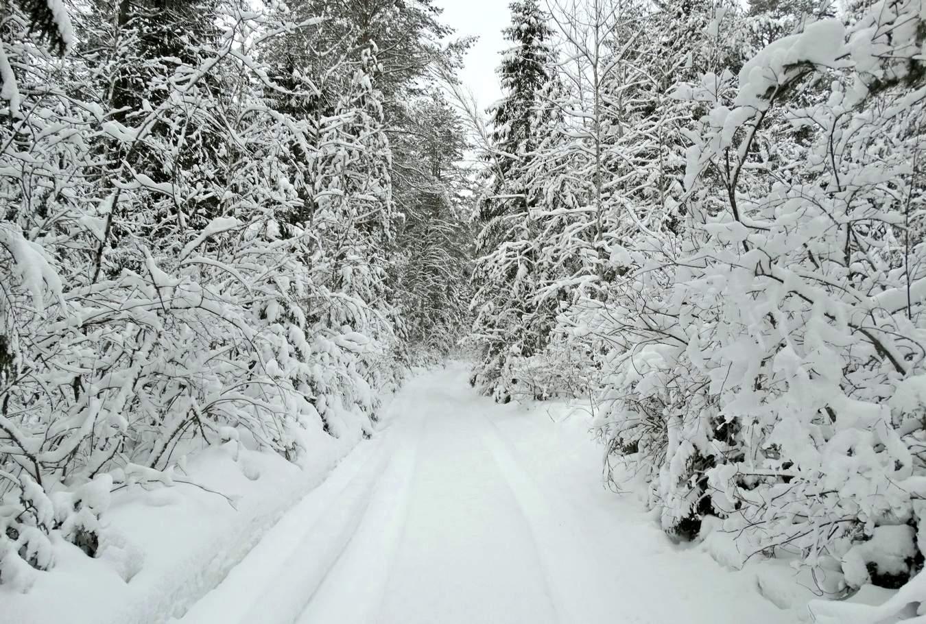 Картинки белый снег