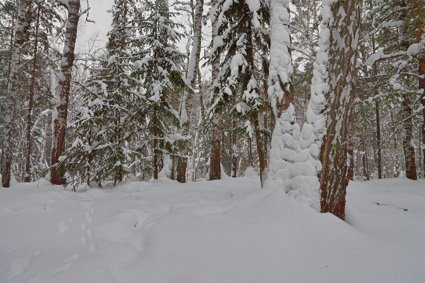 лезут вперед зимний лес луза фото народных методов