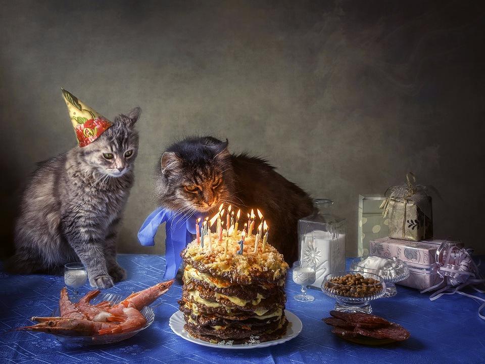 Летием, с днем рождения фото с котиком