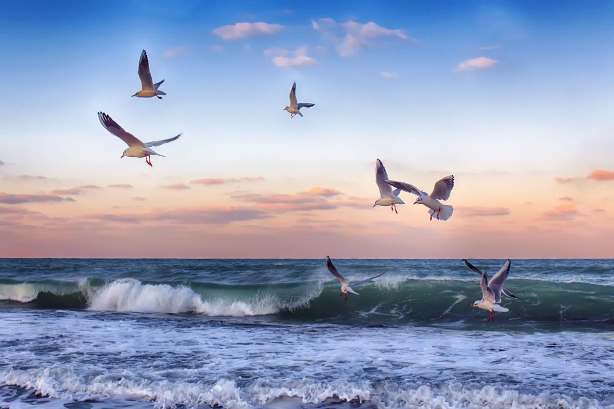 Пони дружба, картинки анимации море с чайками
